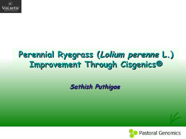 Perennial Ryegrass ( Lolium perenne  L.) Improvement Through Cisgenics® Sathish Puthigae