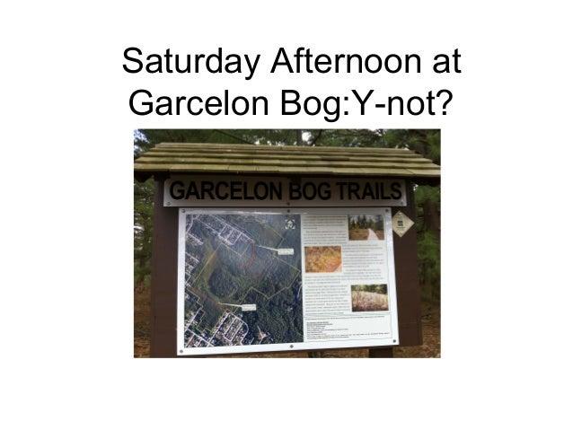 Saturday Afternoon at Garcelon Bog:Y-not?
