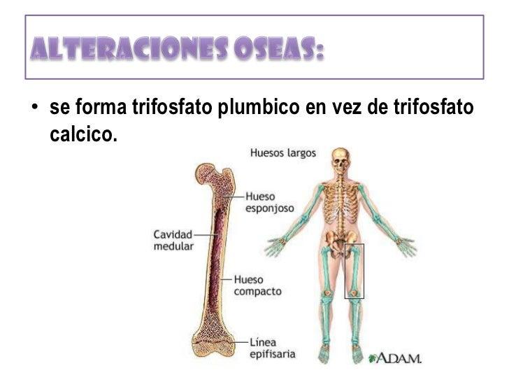 corporal total está en el tejido óseo)