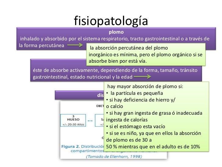 fisiopatología<br />plomo<br /> inhalado y absorbido por el sistema respiratorio, tracto gastrointestinal o a través de la...