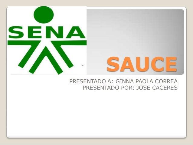 SAUCE PRESENTADO A: GINNA PAOLA CORREA PRESENTADO POR: JOSE CACERES