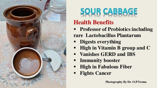 Sauerkraut - Professor of Probiotics  Slide 2