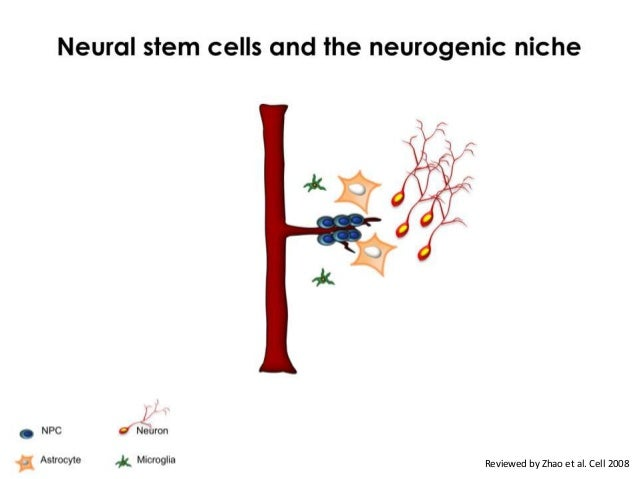 Systemic perturbations in old animals enhances    neural stem cell and cognitive functions                                ...