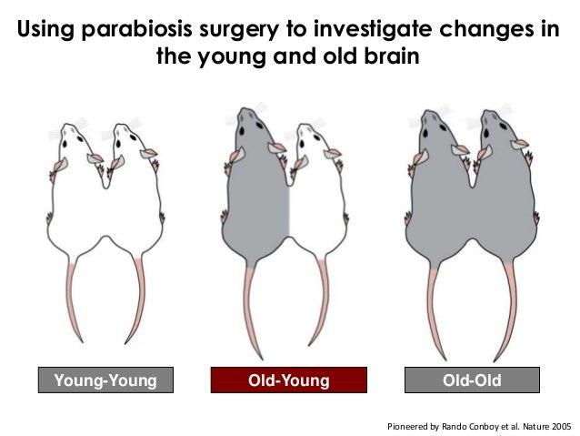 Old = YoungVilleda et al. Nature 2011