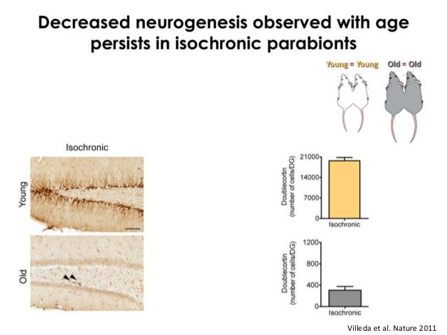 Exposure to young blood enhances neural stem      Stem cells and tissue regeneration          cell function in old animals...