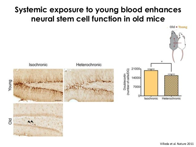 Question: Can the beneficial effects of young blood extend beyond stem cell function?                  Rejuvenation       ...