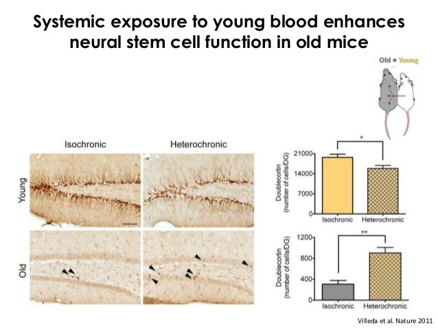 Exposure to young blood improvescommunication between neurons in the old brain                                 Old-Old   O...