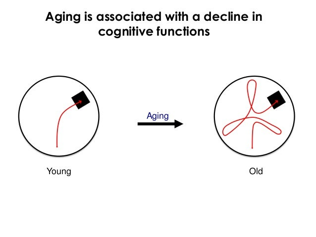 Aging is associated with a decline in         cognitive functions                 AgingYoung                             Old