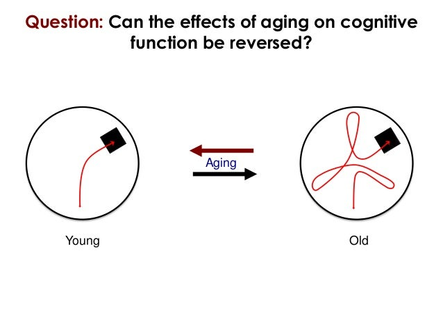 Question: Can the effects of aging on cognitive            function be reversed?                     Aging    Young       ...