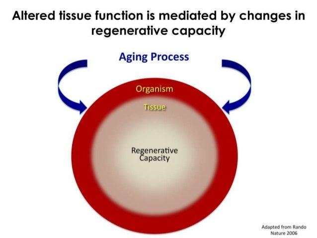 Stem cells and tissue regeneration