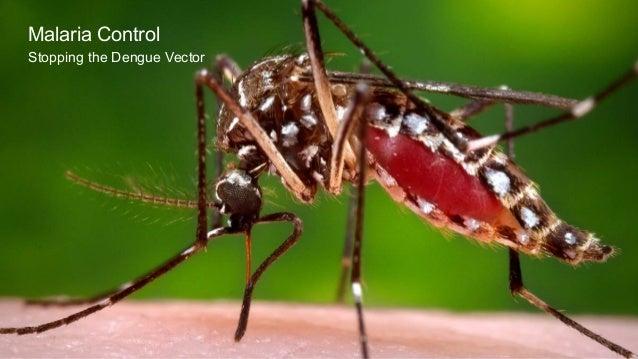 Malaria Control Stopping the Dengue Vector