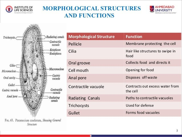 vacuole structure and function pdf