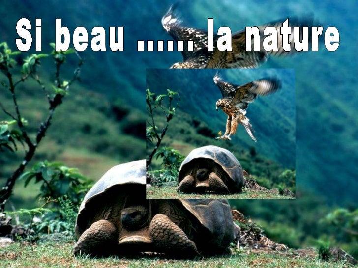 Si beau ...... la nature