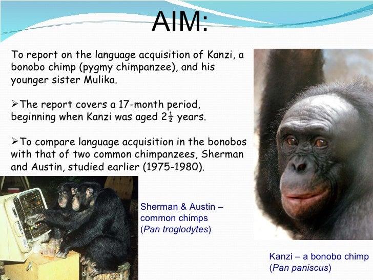Kanzi and mulika study skills