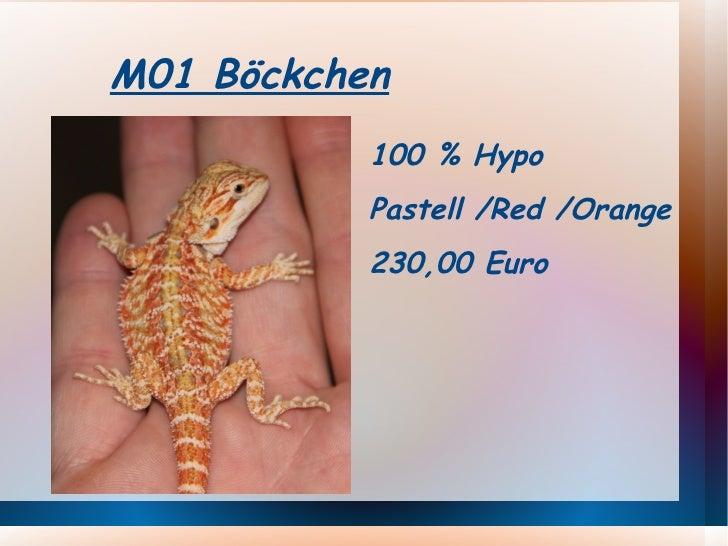 <ul>M01 Böckchen </ul><ul><li>100 % Hypo