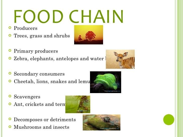 Lemur Food Chain