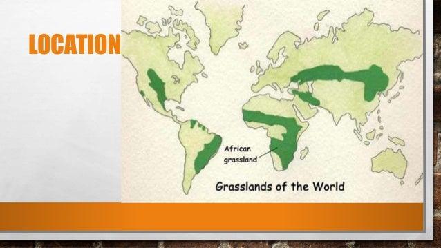 Savanna Biome World Map.Savanna Grasslands