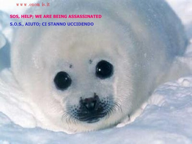 SOS, HELP; WE ARE BEING ASSASSINATED S.O.S., AIUTO; CI STANNO UCCIDENDO www.enomis.it