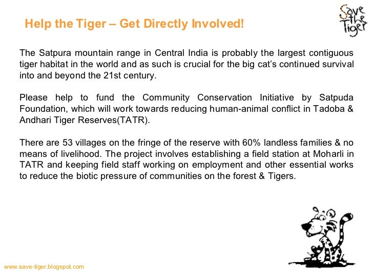 endangered tigers essay