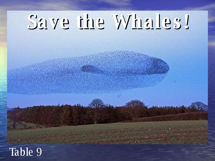 Save the Whales! Table 9
