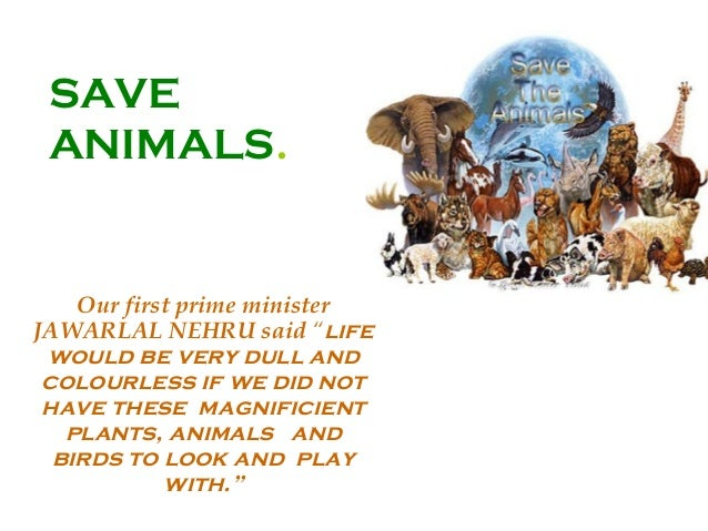 save animals essay for class 3