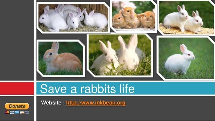 Save a rabbits lifeWebsite : http://www.inkbean.org