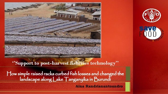 ''Support to post-harvest fisheries technology'' How simple raised racks curbed fish losses and changed the landscape alon...