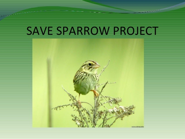 SAVE SPARROW PROJECT