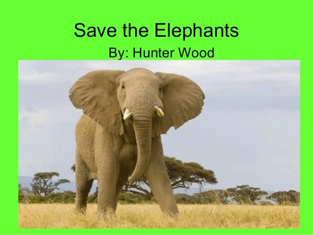 Save the Elephants   By: Hunter Wood