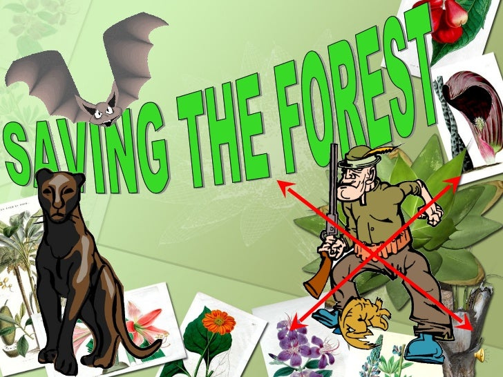 SAVING THE FOREST