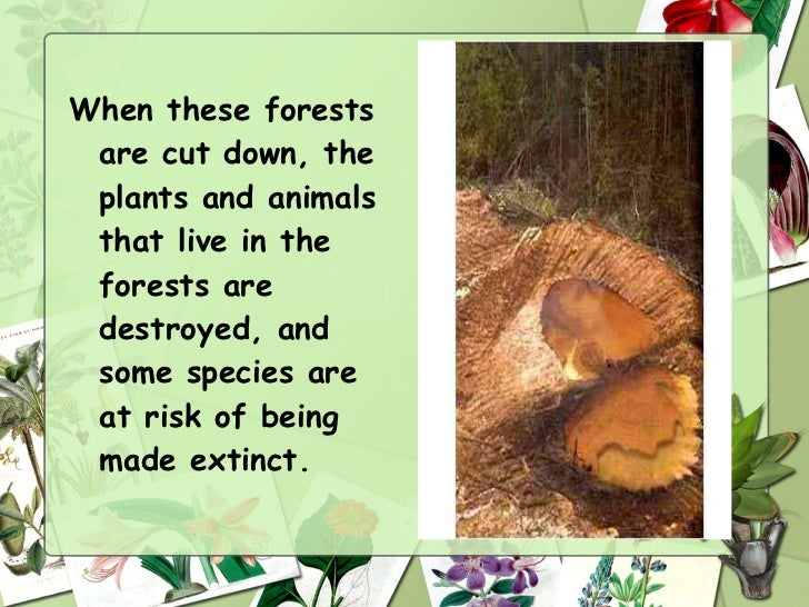 saving the forest essay Deforestation essay for class 1, 2, 3, 4, 5, 6 saving forests and plants is in our own hand and only a small step from the end of us all may show a big result.