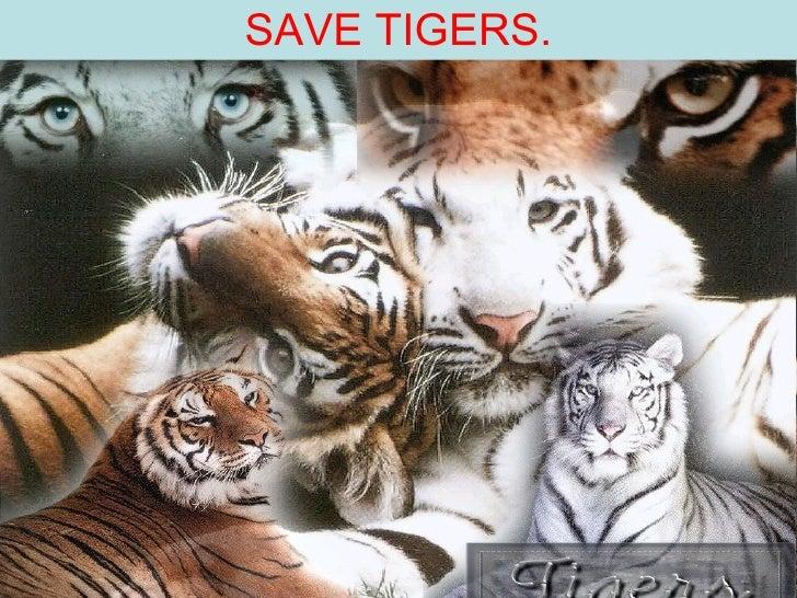 SAVE TIGERS.