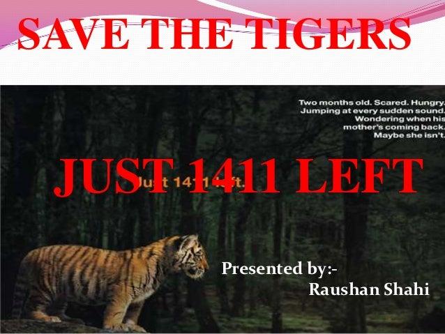 comparing tigers essay