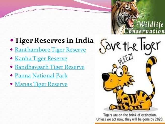 save tiger india essay The fight to save the tiger by phil mckenna he gives them hope that they can save their own tigers and other big cats karanth, 63 in the forests of southwestern india, the tiger's future looks promising.