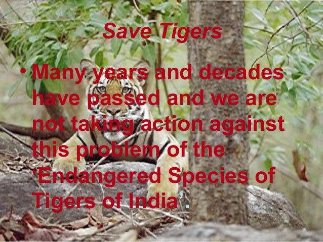 Essay save tiger campaign