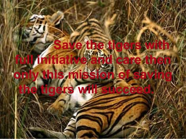 Save tiger project essay