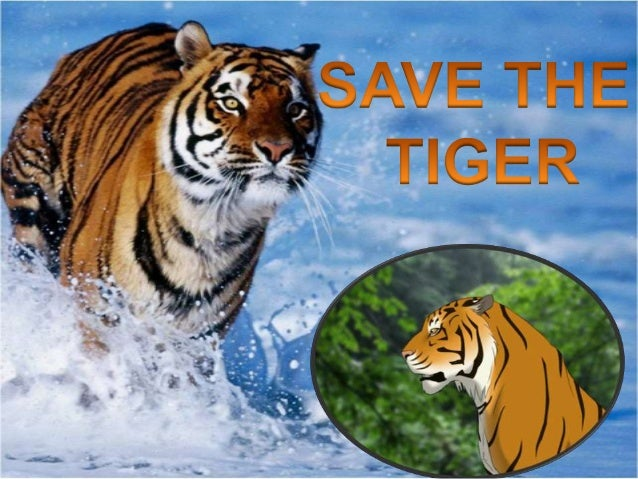 Paragraph on Save Our Tiger – by Shanu