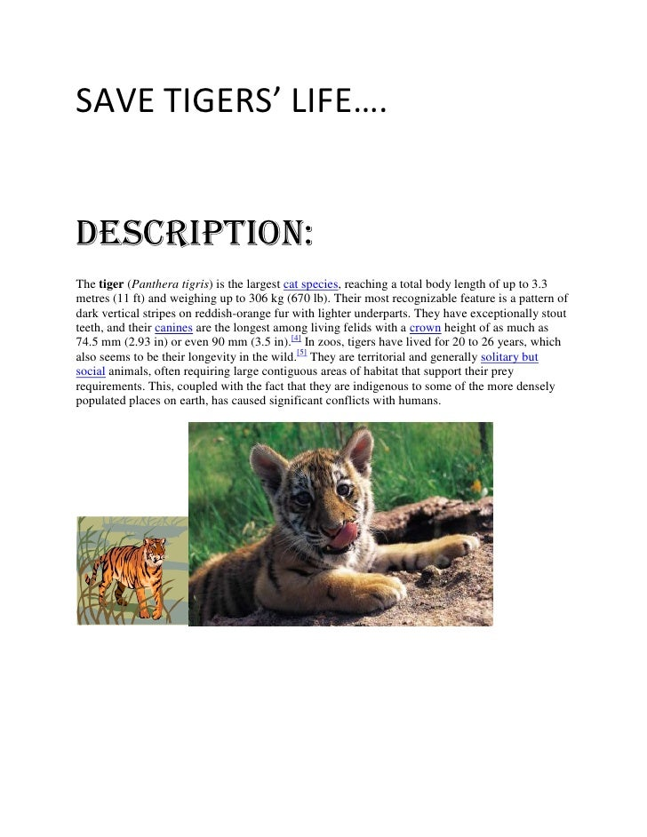 SAVE TIGERS' LIFE….DESCRIpTION:The tiger (Panthera tigris) is the largest cat species, reaching a total body length of up ...