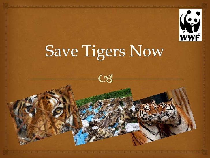 "The main message or ideas behind the campaign                                  ""Save Tigers Now"" campaign is an internati..."