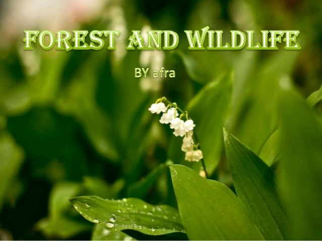 420 words essay on Let Us Save the Wildlife