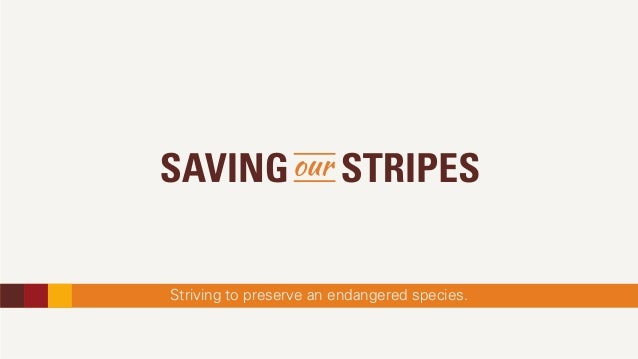 Striving to preserve an endangered species.