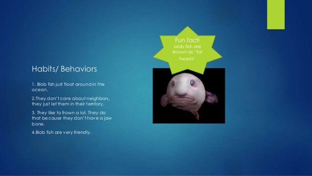 Blobfish Eating Habits