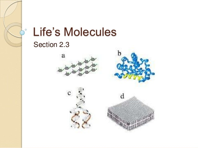 Life's MoleculesSection 2.3