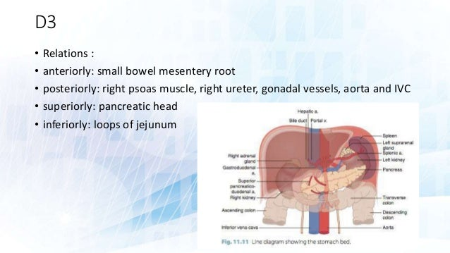 RADIOLOGIC ANATOMY OF SMALL INTESTINE AND INTRODUCTION TO SMALL BOWEL…