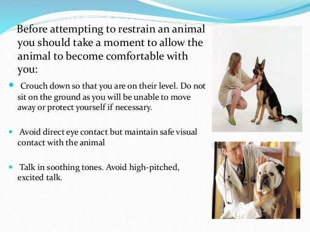 Manual Restraint Methods For Cats With Pictures