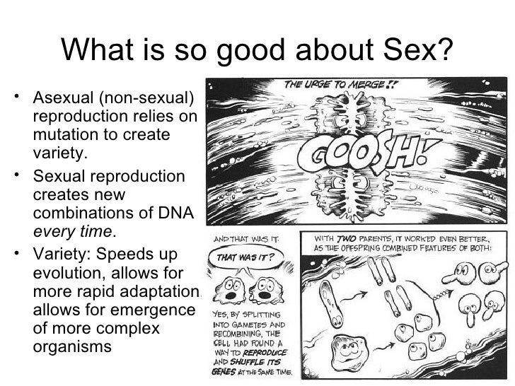 what is so good about sex