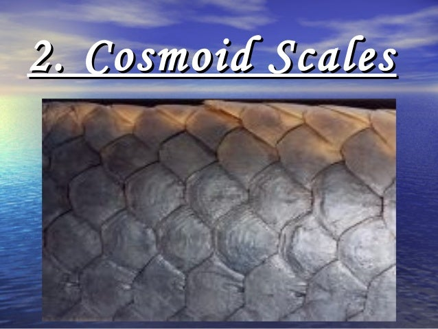 Types of Scales in Fishes