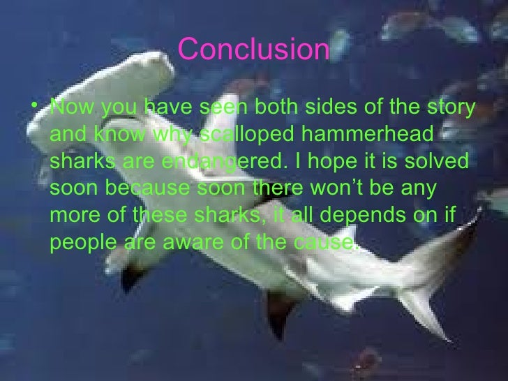 hammerhead sharks essay The methods sharks use to find and hunt their prey vary as much as the number of shark species inhabiting our oceans  hammerhead sharks also sometimes hunt in groups.