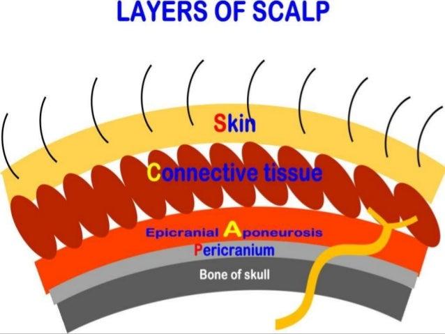 Scalp Layers