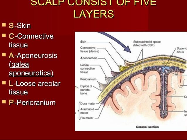 scalp 2 4 638?cb=1360838956 scalp (2)